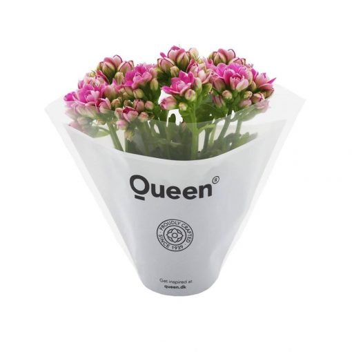 Kalançoe Çiçeği ( Kalanşo ) Kolay Bakım 1