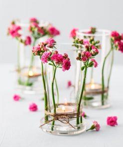 Kalançoe Çiçeği ( Kalanşo )  Kolay Bakım 3