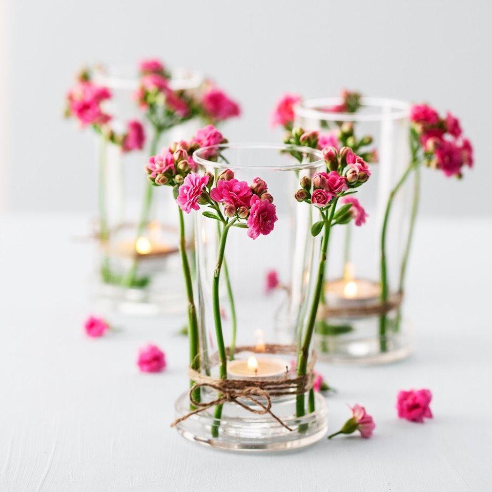 Kalançoe Çiçeği ( Kalanşo )  Kolay Bakım 2