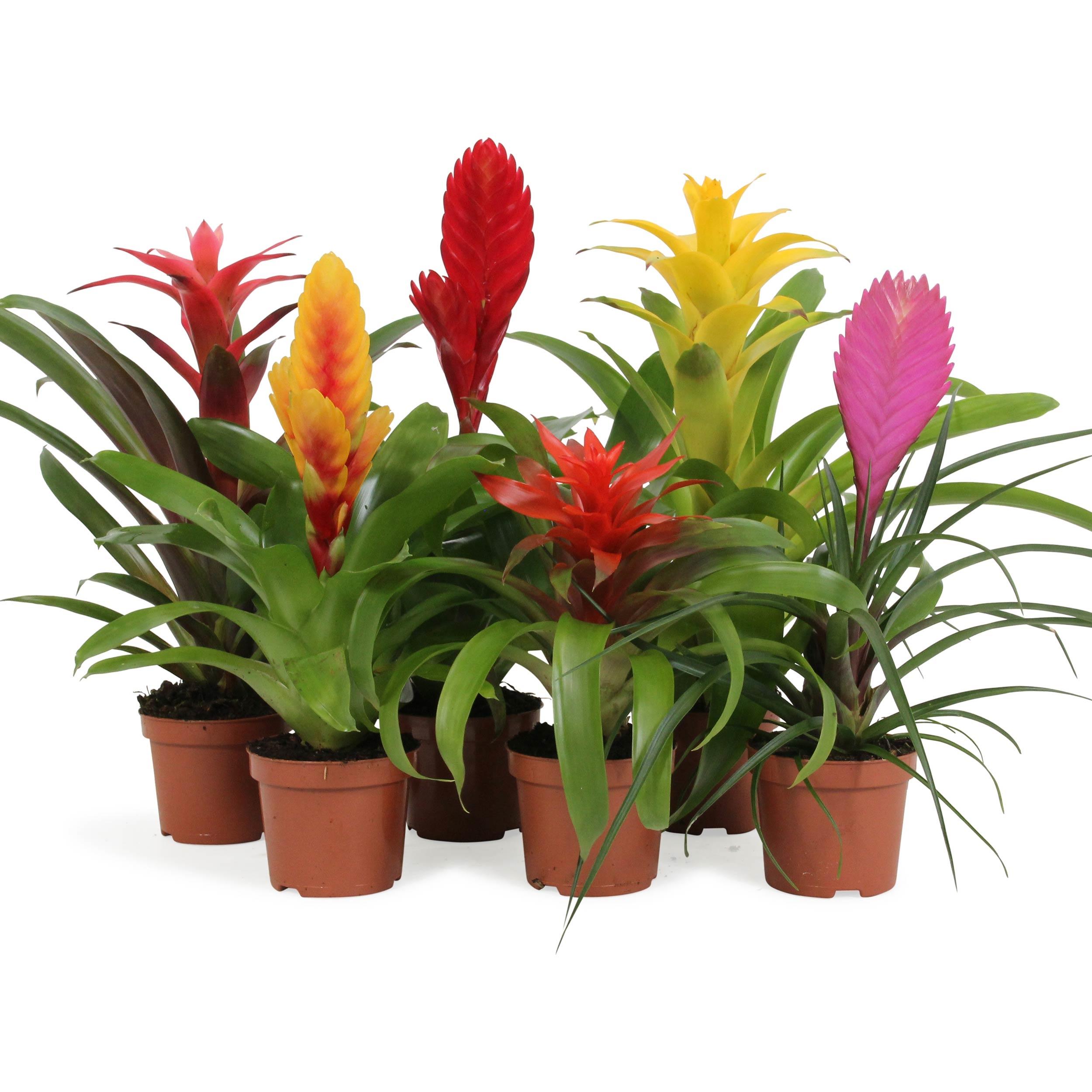 Nasa Hava Temizleyen Çiçekli Bitkiler