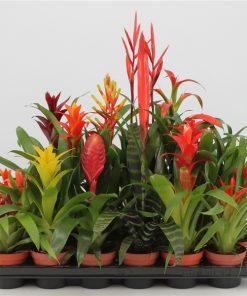 HAva temizleyen bitki