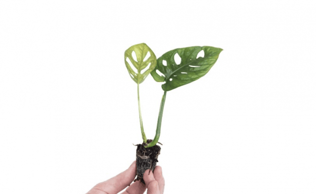 Çiçek Market Online Bitki ve Çiçek Satışı