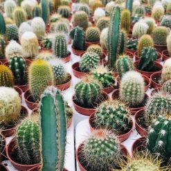 Peyzaj Burada İthal İç Mekan Bitkiler ve Çiçekler 26