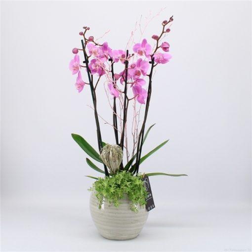 Phal-2005rz phalaenopsis creatie - 3 - Adet 1